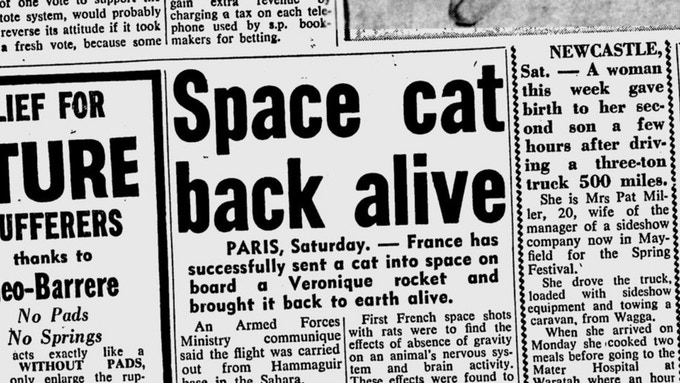 Félicette - The First Cat in Space