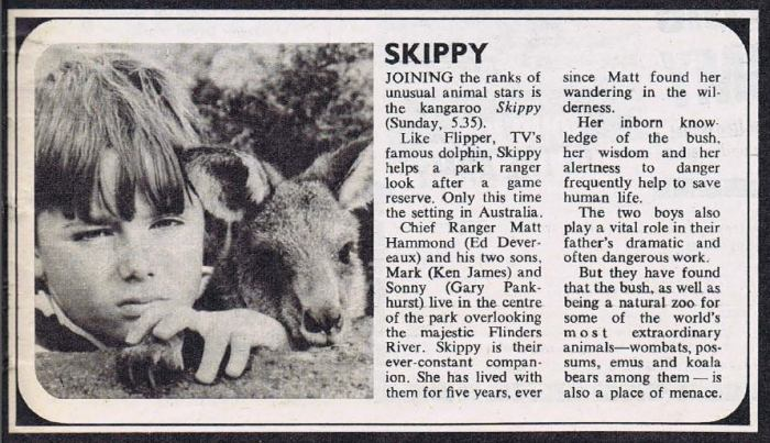 "A short article introducing viewers to ""Skippy the Bush Kangaroo"" in 1967, from TV World magazine"