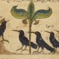 A court of crows, as featured in a page from the Arabic version of Kalila wa dimna, dated 1210 CE