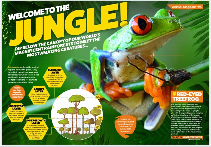 A sample spread from Animal Planet magazine, published by DC Thomson Media