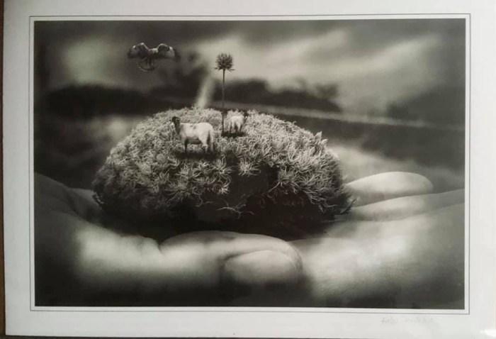 Sheep by Helen Pateman