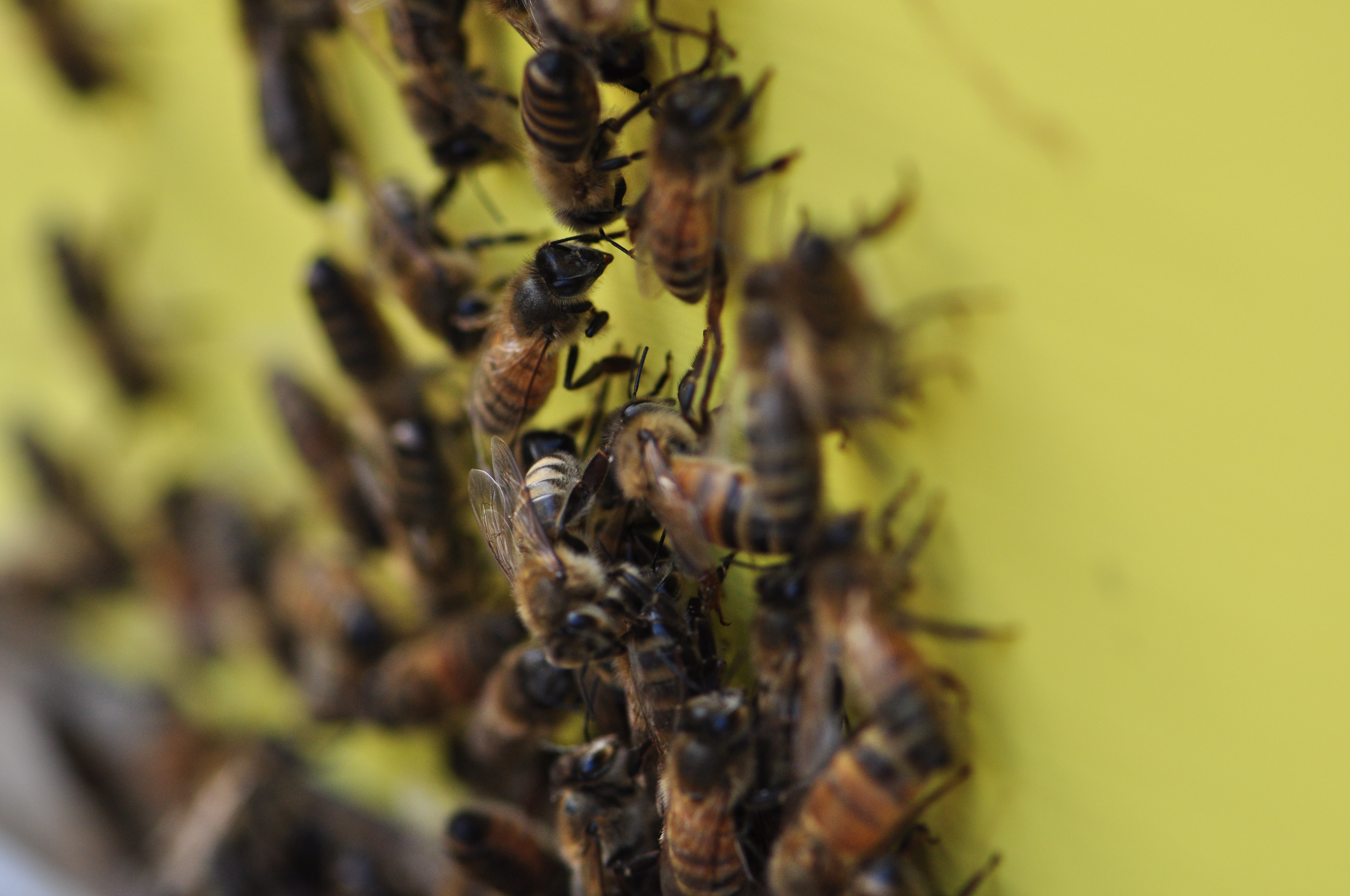 bees in front of the hive
