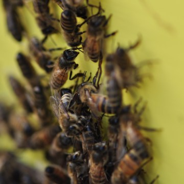 Bees on the hive…