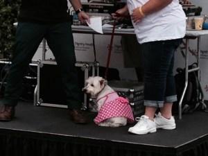 4 12 Pink dot dog