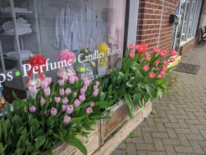 Colorful tulips outside of Green Willow Spa in Downtown Ellijay