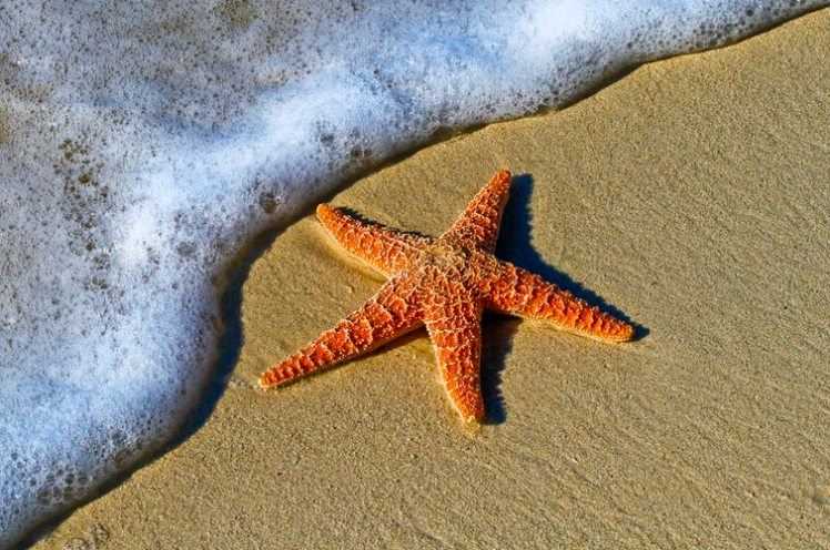 A starfish on the beach.