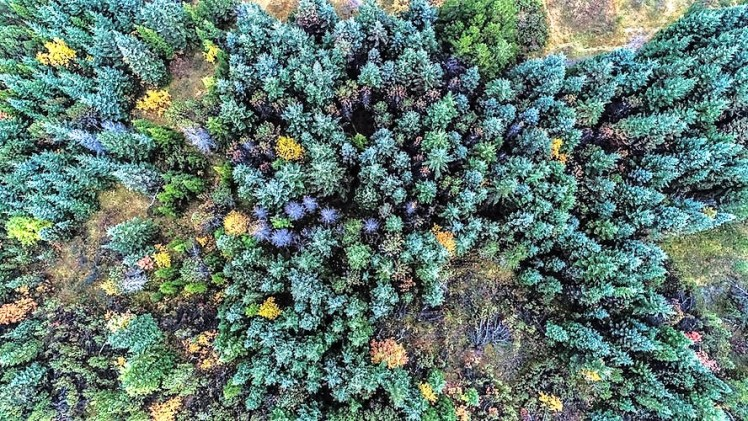 An overhead picture of a forest canopy.