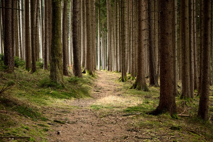 A picture of a pathway running through a forest.