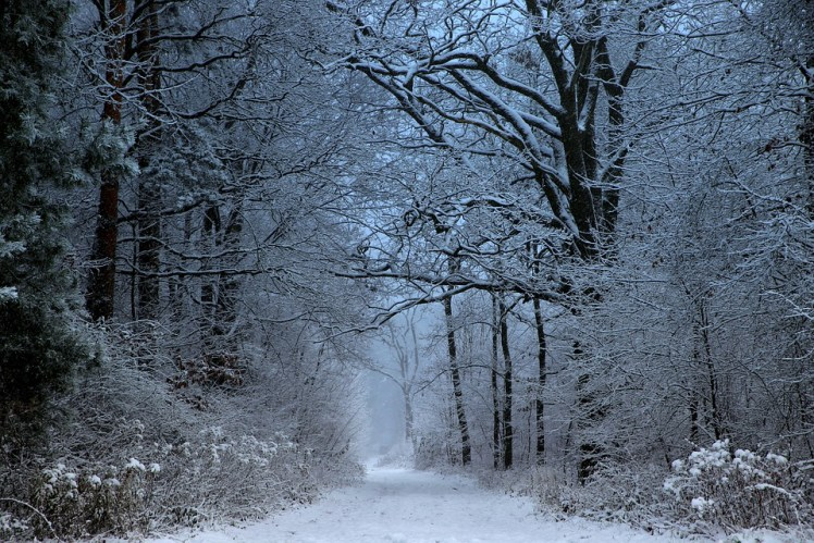 A winter scene with an old road running through a forest.