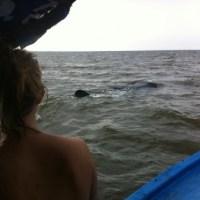 Sprung ins warme Wasser! Wie man einen Walhai reitet