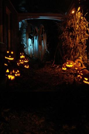 pumpkinrot6