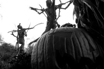 pumpkinrot7