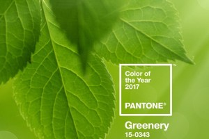 Pantone colour of the year greenery