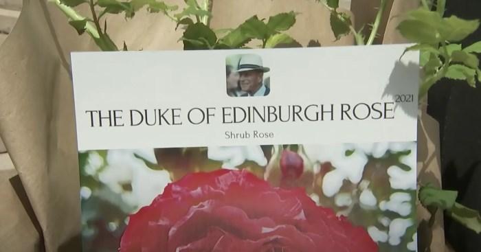 prince philip rose