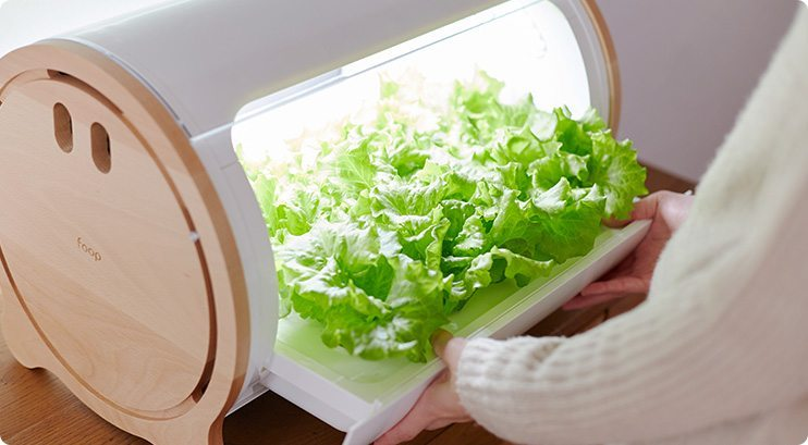 appareil à cultiver des salades design