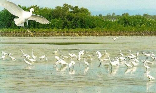 Trekvogels bij Olango Island - Cebu, Central Visayas, Filipijnen