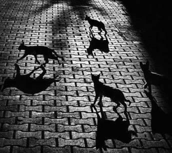 cats-night