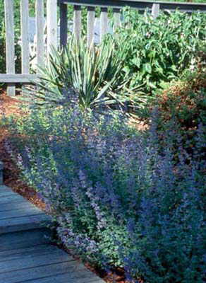 Columbia SC Landscape Company We Do It All Low Cost Columbia Hardscape Contractors