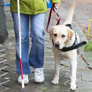 FSA spending ; Guide dog