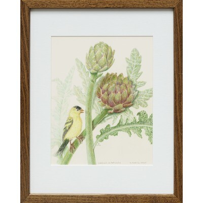 Sylvia Portillo -- Goldfinch on Artichoke