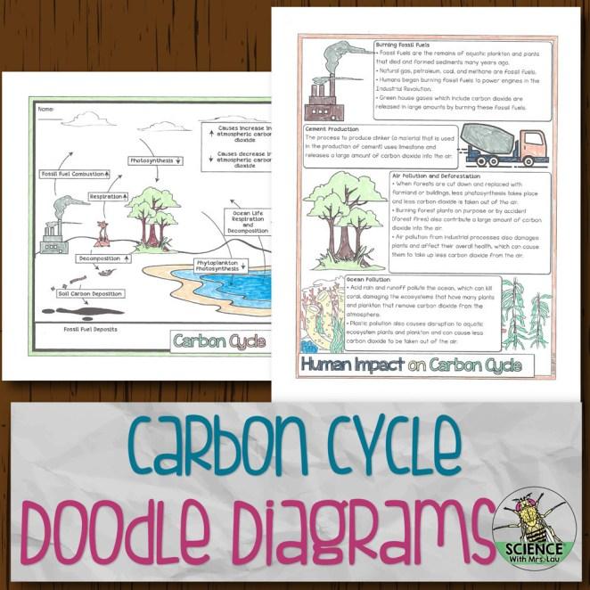Carbon Cycle Doodle Diagrams