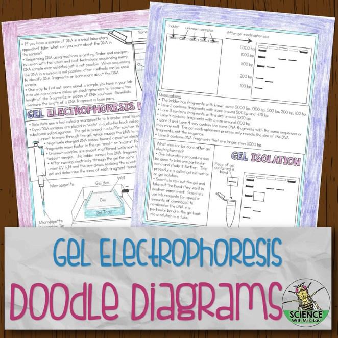 Gel Electrophoresis Doodle Diagrams