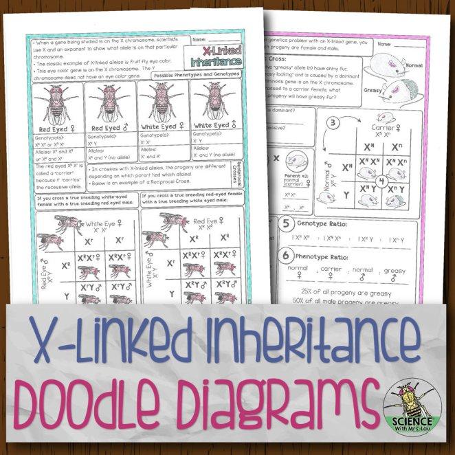 X-Linked Inheritance Doodle Diagrams