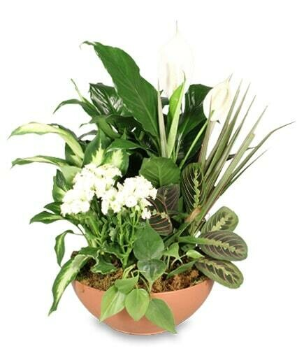 Green Dish Garden - Container May be in a basket or pot