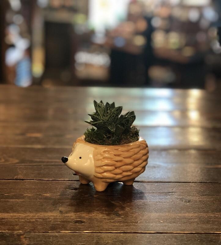 Hedgehog 'Perky'