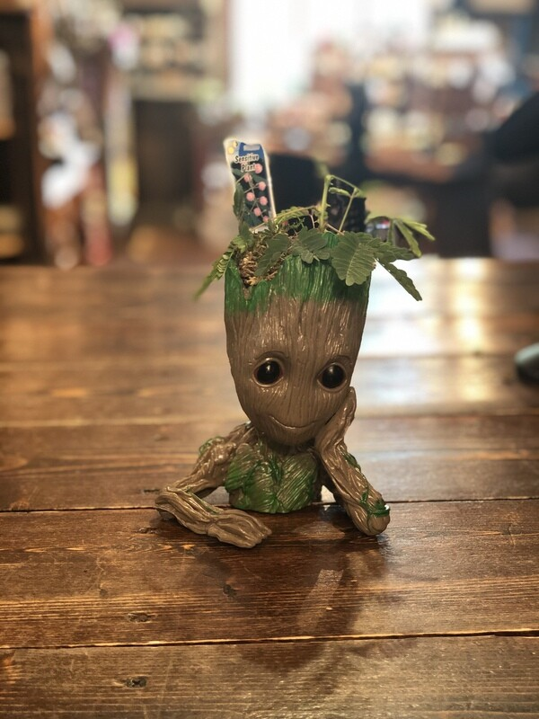 I am Groot too with Sensitive Plant