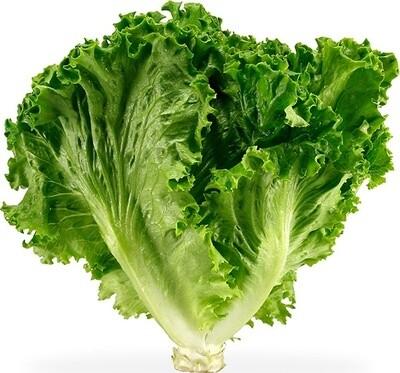 Field Lettuce
