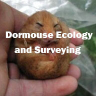 Dormouse Ecology and Surveying (Exeter): 26th May 2020