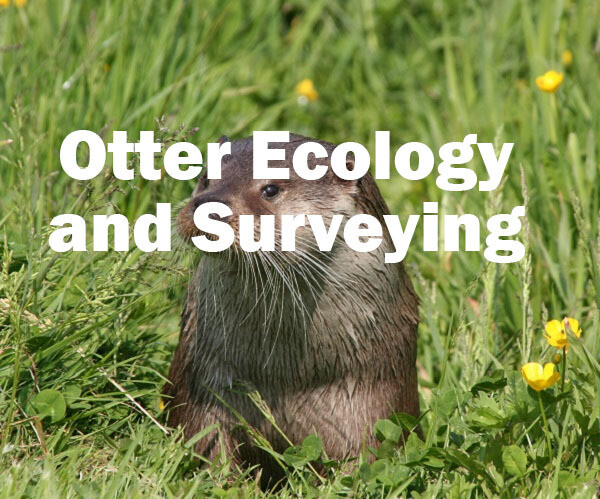 Otter Ecology and Surveying Self study