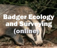 Badger Ecology and Surveying Online Course