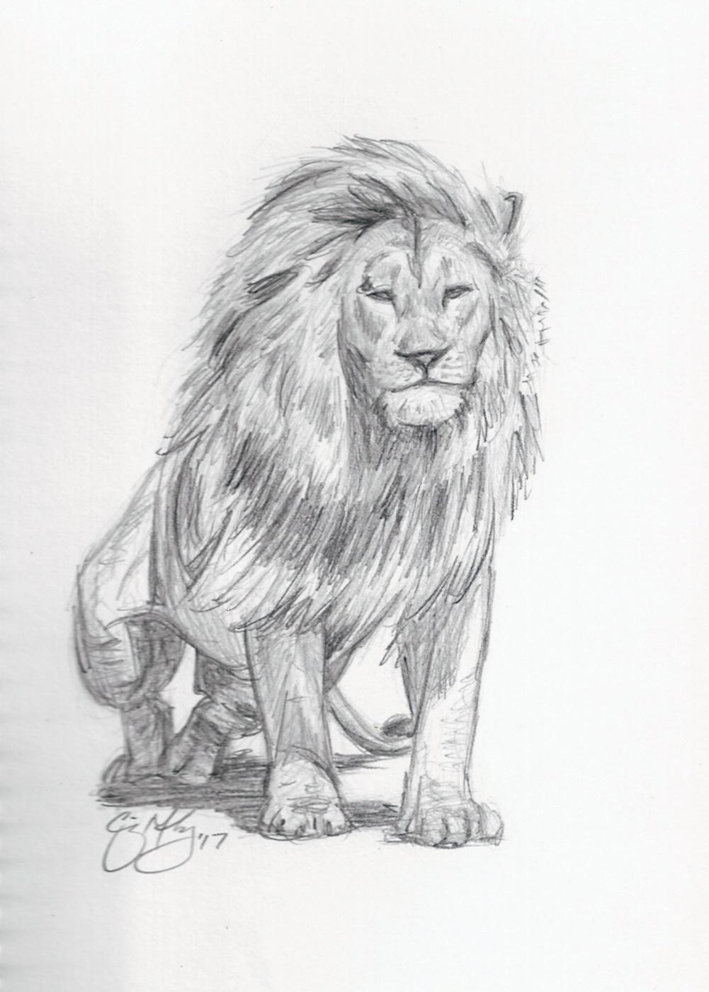 Lion Sketch Craig Mahoney Art Online Store Powered By Storenvy