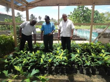 Minister of Agriculture Noel Holder along with Permanent Secretary of the Ministry of Agriculture, George Jervis and Chief Executive Officer of the National Agricultural Research and Extension Institute (NAREI), Dr Oudho Homenauth examines breadfruit seedlings during a visit to the institution