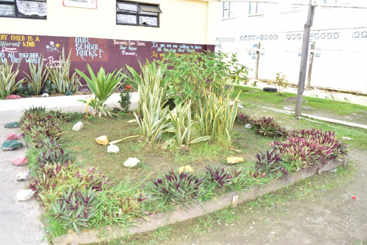 A section of the All Saints Primary's compound. The school has been promoting its own environmental project