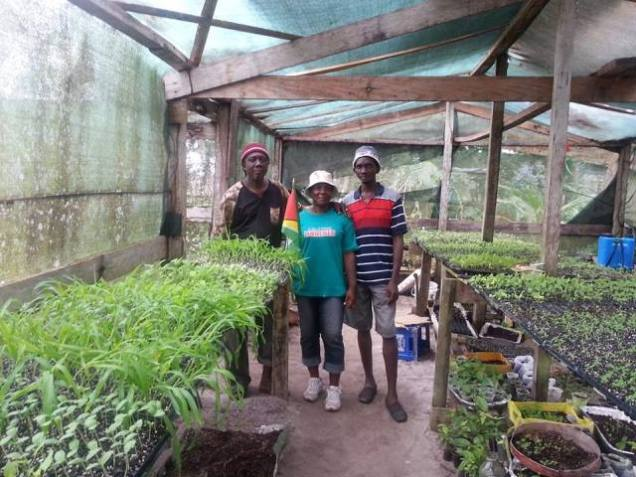 The seedling producers, Oliver Tappin [left] Wonda Richmond [centre] and Cleveland Tappin [right].