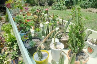 Some of the plant available for sale at the Green Life Floral green house.