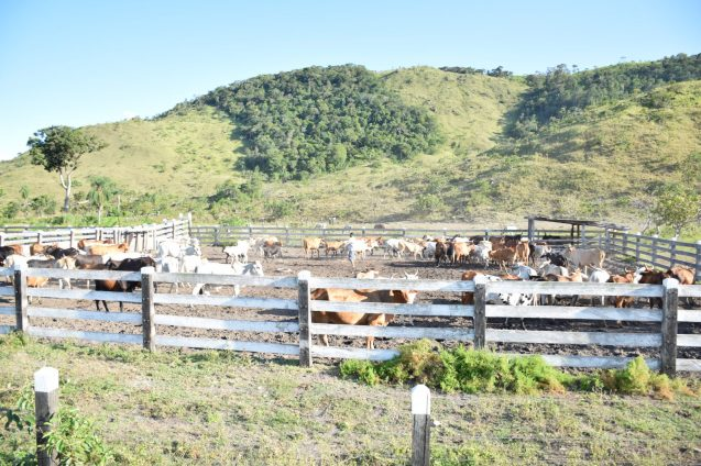 The Aranaputa Cattle Ranch under the Community Development Plan (CDP) project, Region Nine