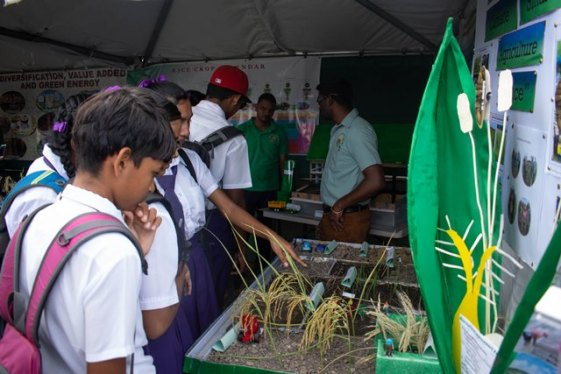 School children exploring an exhibit at the World Food Day 2018 Observation.