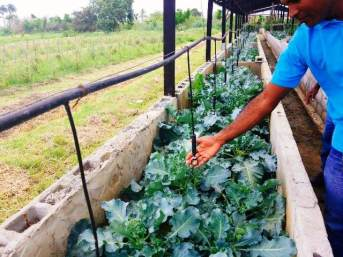GSA student showing the drip irrigation system installed.