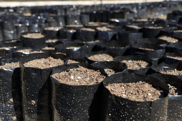 The soil prepared for placed in bags