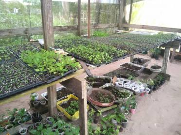 Sections of the One Mile Extension Seedling Nursery.