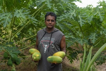 Local farmer displaying papaya