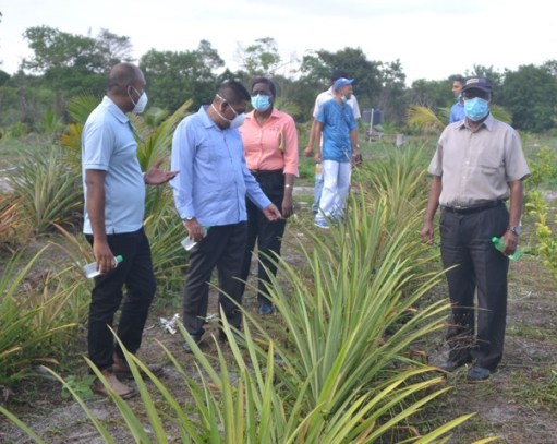 Minister of Agriculture, Hon. Zulfikar Mustapha and his team are given a guided tour of the William Adams Farm at Dalgin.