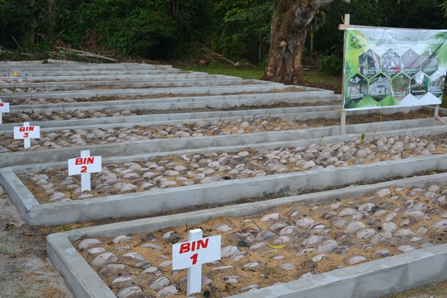 The coconut nursery at Kairuni, Soesdyke-Liden Highway