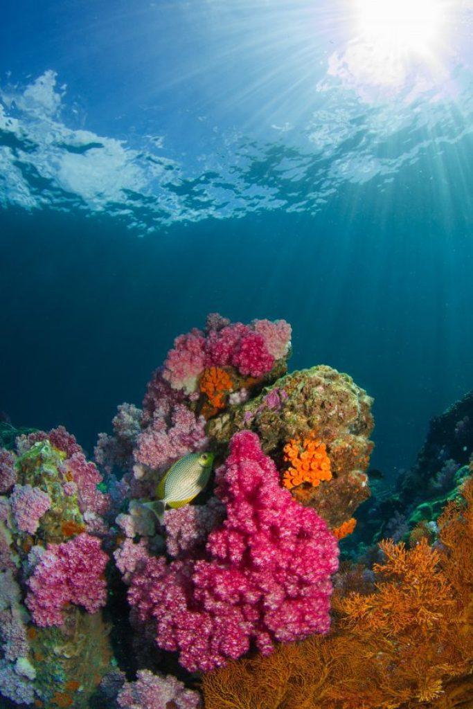 corales koh lipe