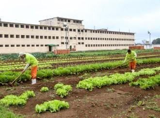 Governo irá investir cifra milionária em reformas de prisões