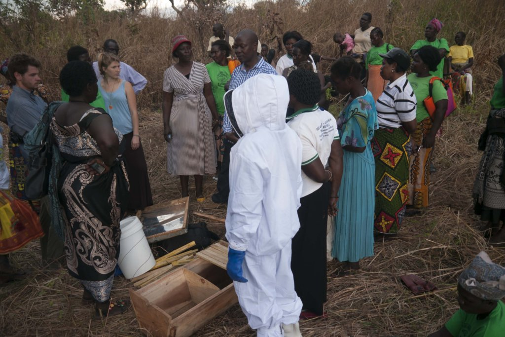 In action at a beekeeping training!